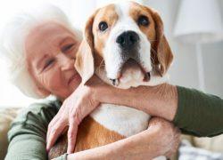 Pet adoption for Seniors