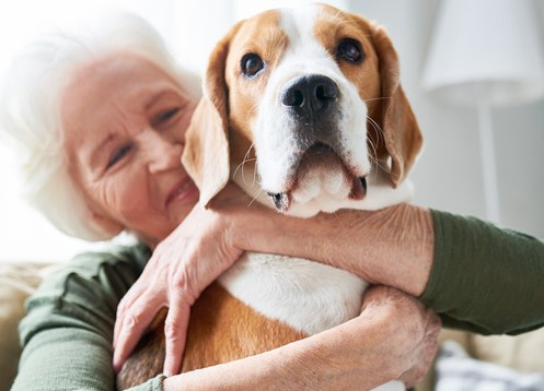 Pet adoption for Seniors